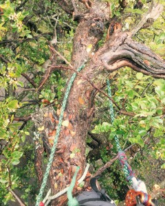 Tree Disease Diagnosis | Fort Worth Tree Disease Treatment