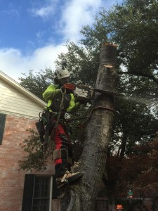 integrity tree care worker | tree removal