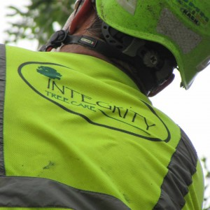 integrity tree care tree fertilization