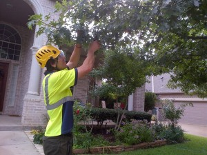 integrity workers pruning tree