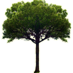picture of a tree